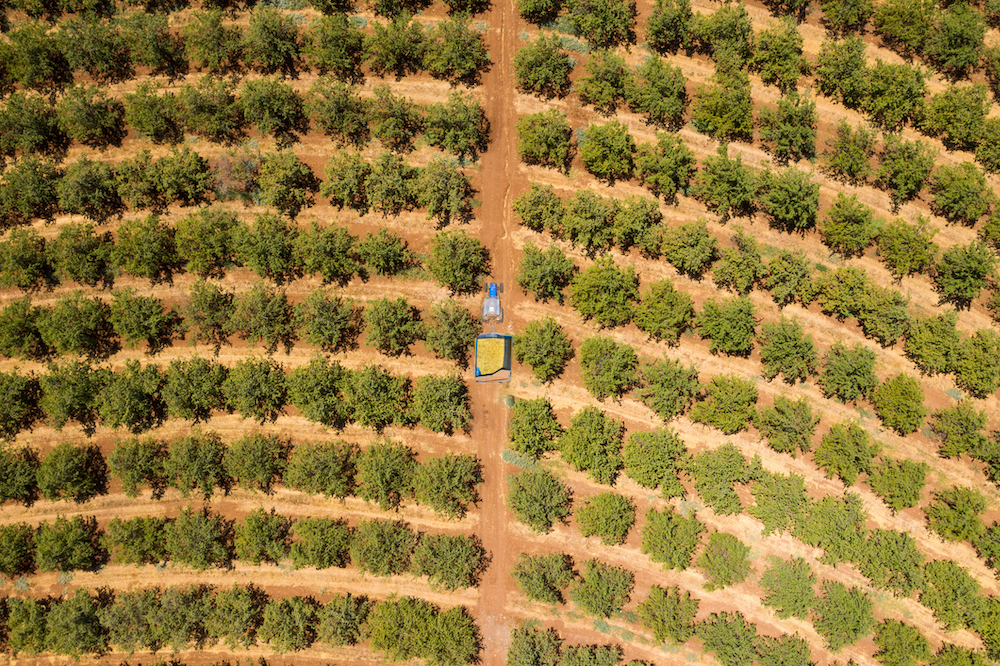 aerial almond orchard trailer