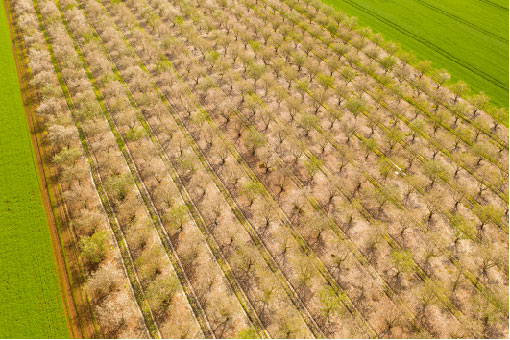 aerial spring orchard-email