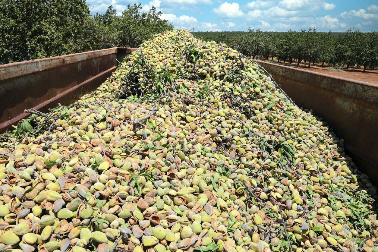 almond harvest pile in truck