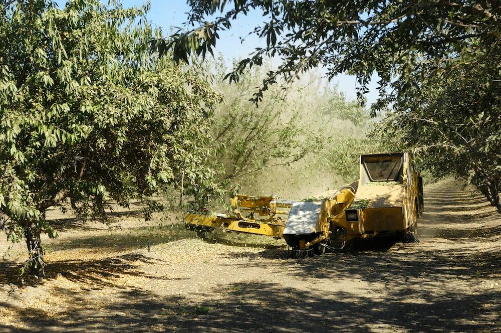 almond_harvest