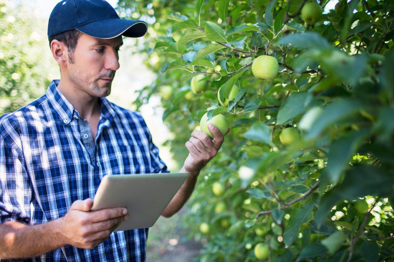 apple grower with iPad