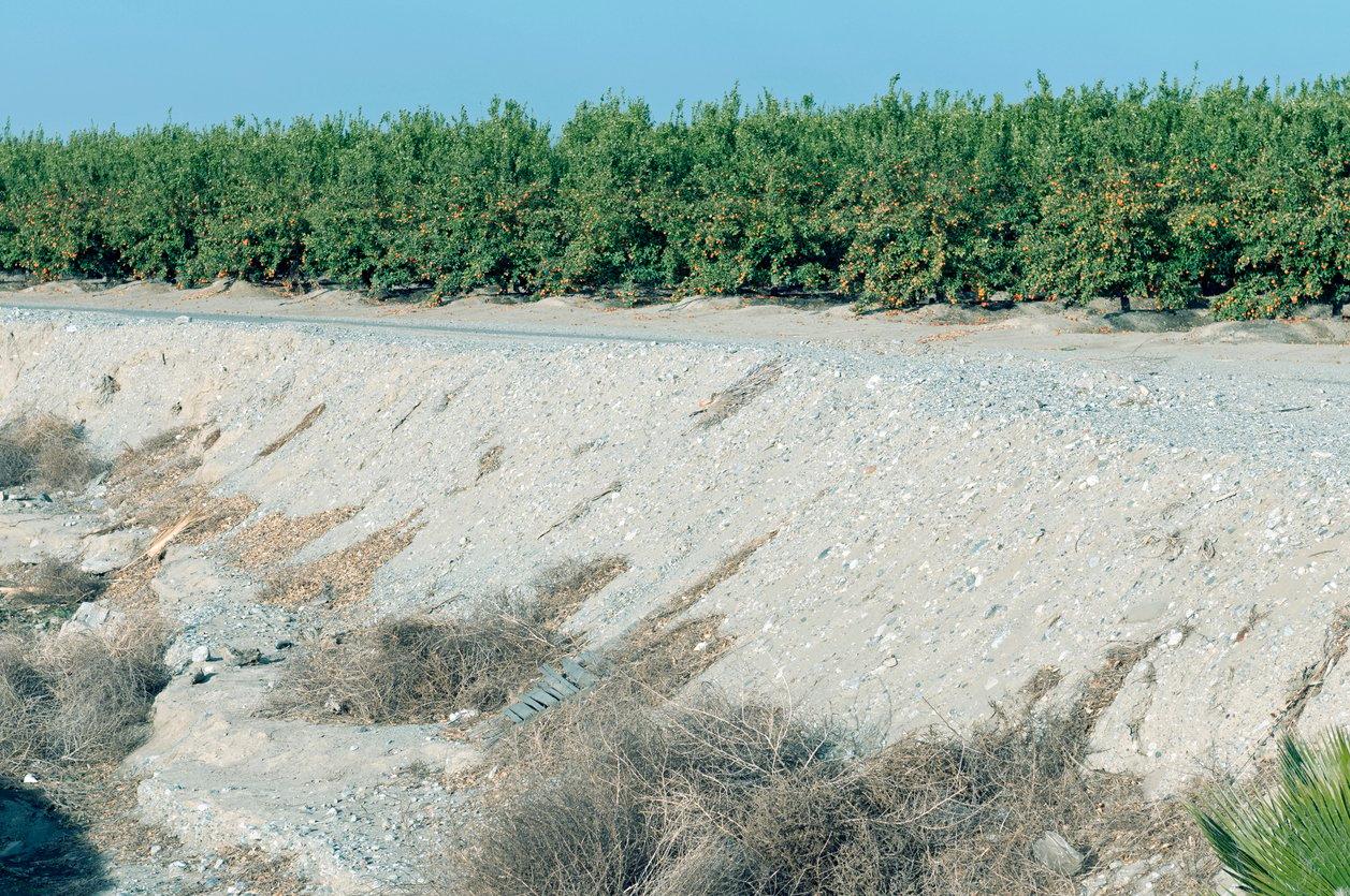 dry soil citrus orchard
