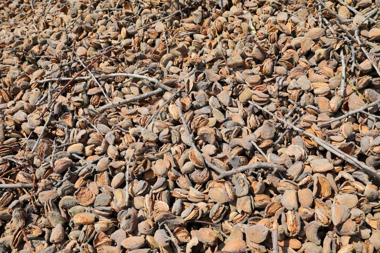 dry_almonds