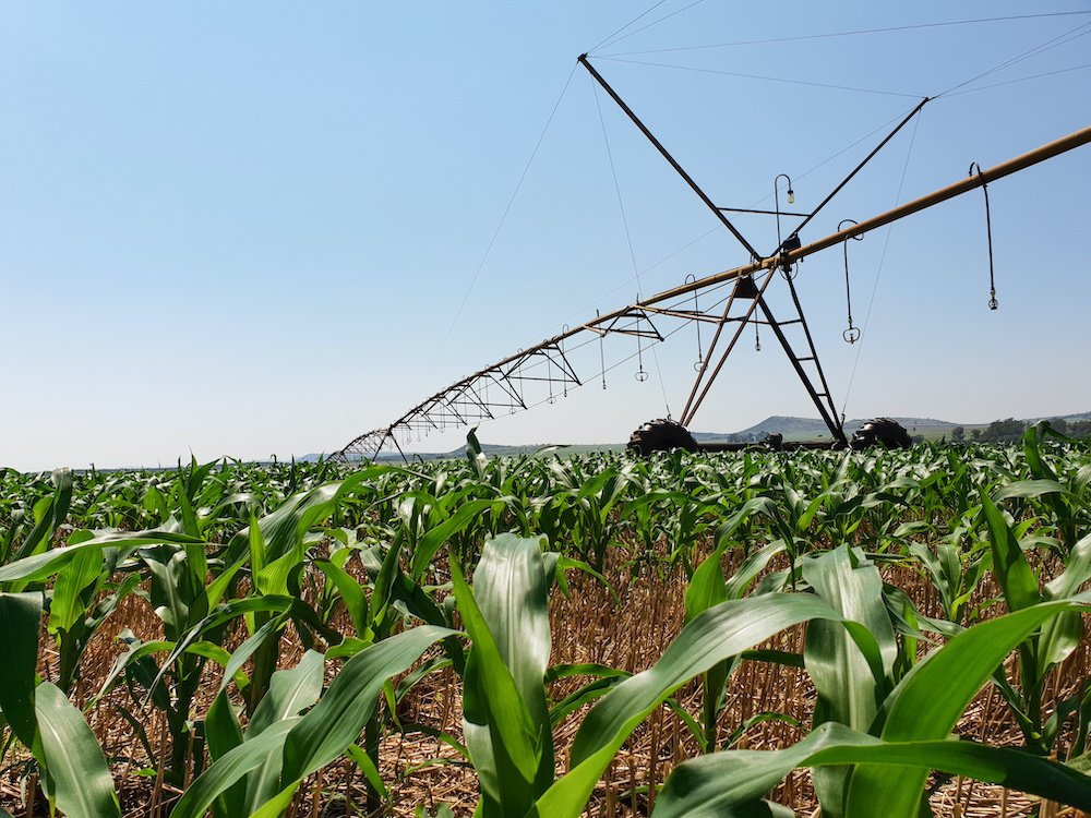 early season corn pivot
