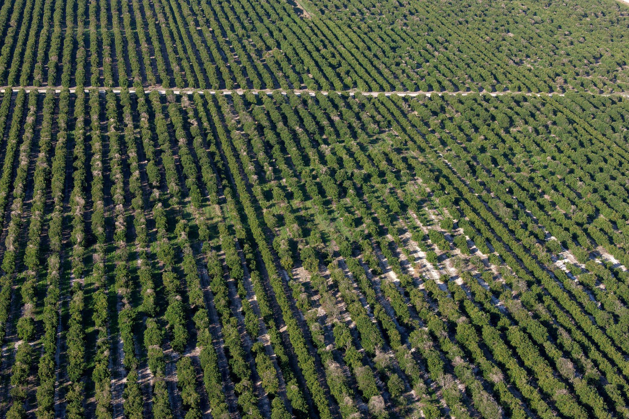 orange grove aerial Florida