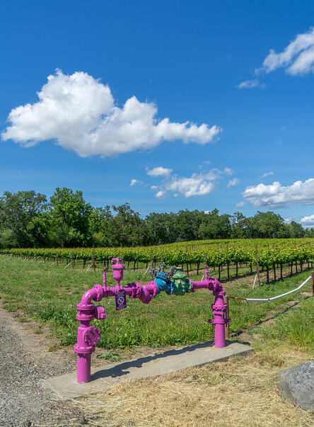 recycled water on vineyard