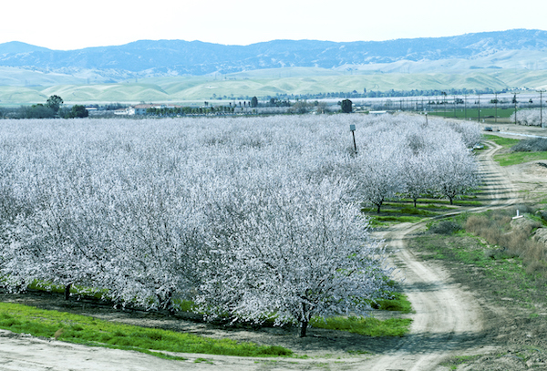 spring orchard central CA