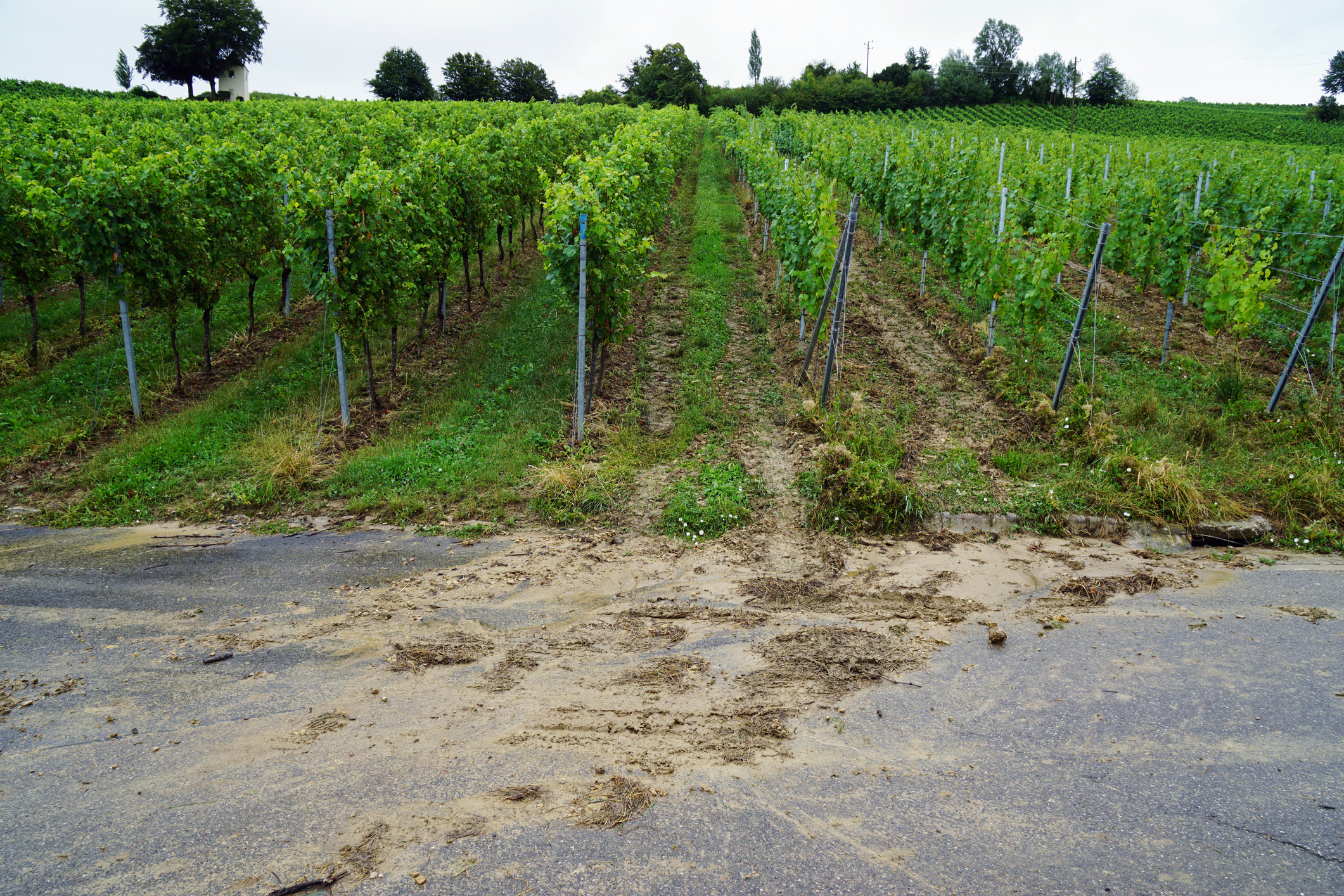 vineyard_erosion