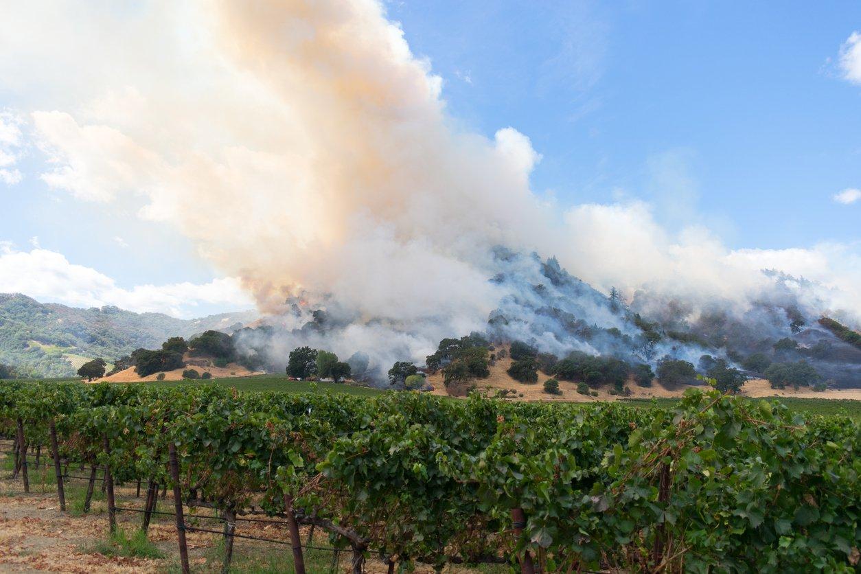 vineyard_fire