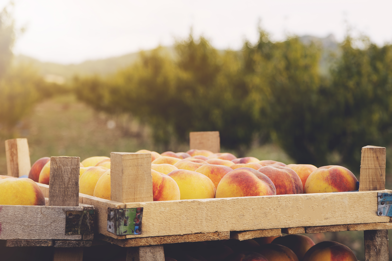 AdobeStock_290835413-peach box