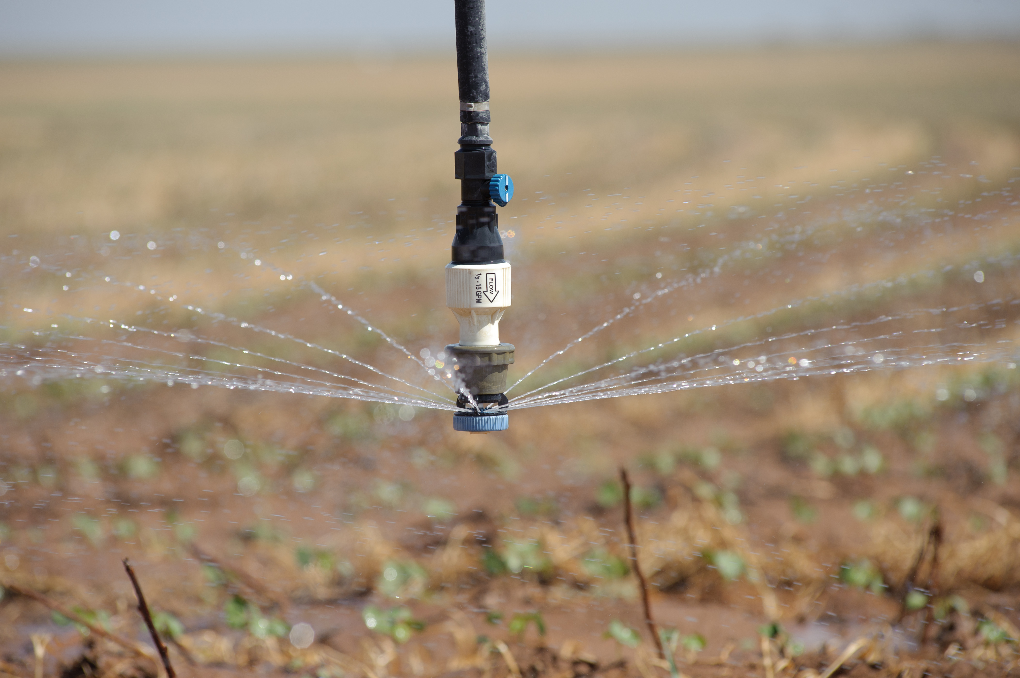 Center_pivot_irrigation_system_drop_nozzles_are_used_efficiently_to_deliver_water_to_cotton_crop._(25117043355)