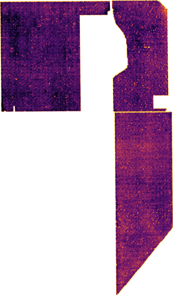 Tree stress seen in thermal image