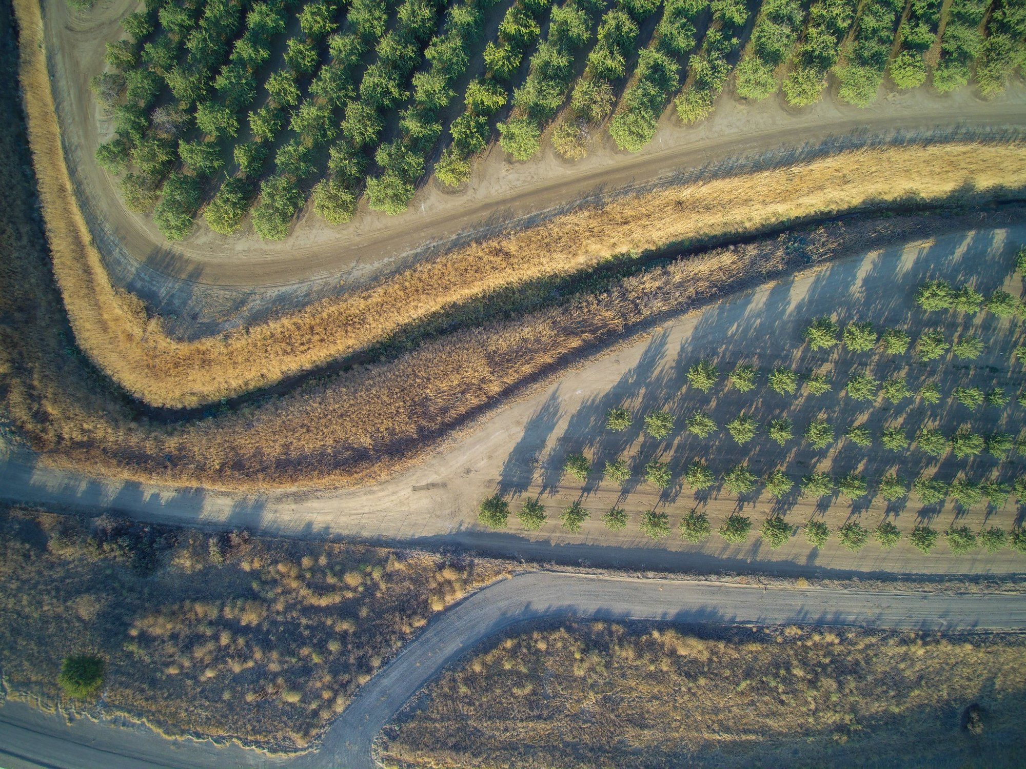 aerial_orchard_portion