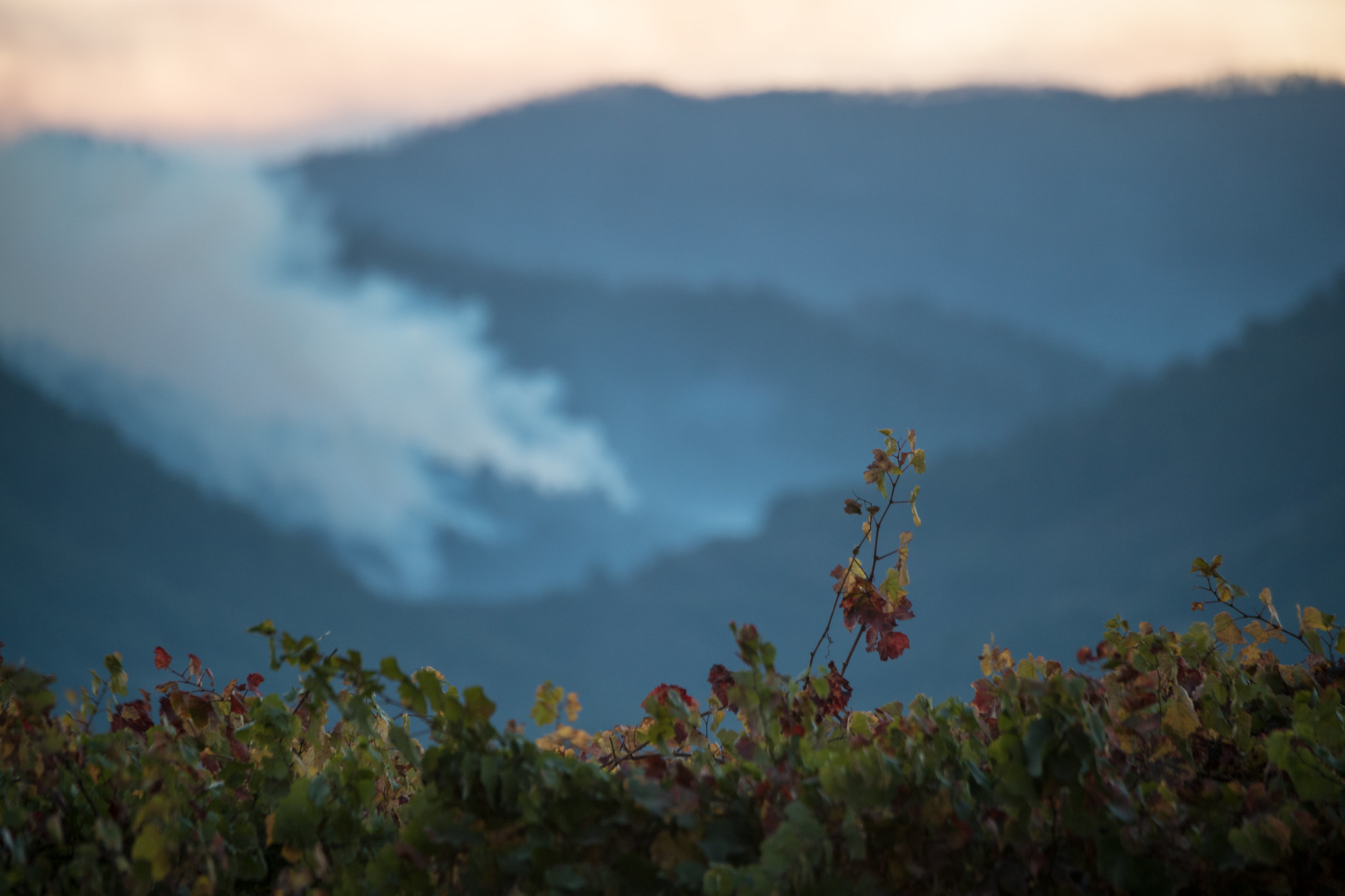 Smoke rises in a valley behind a vineyard
