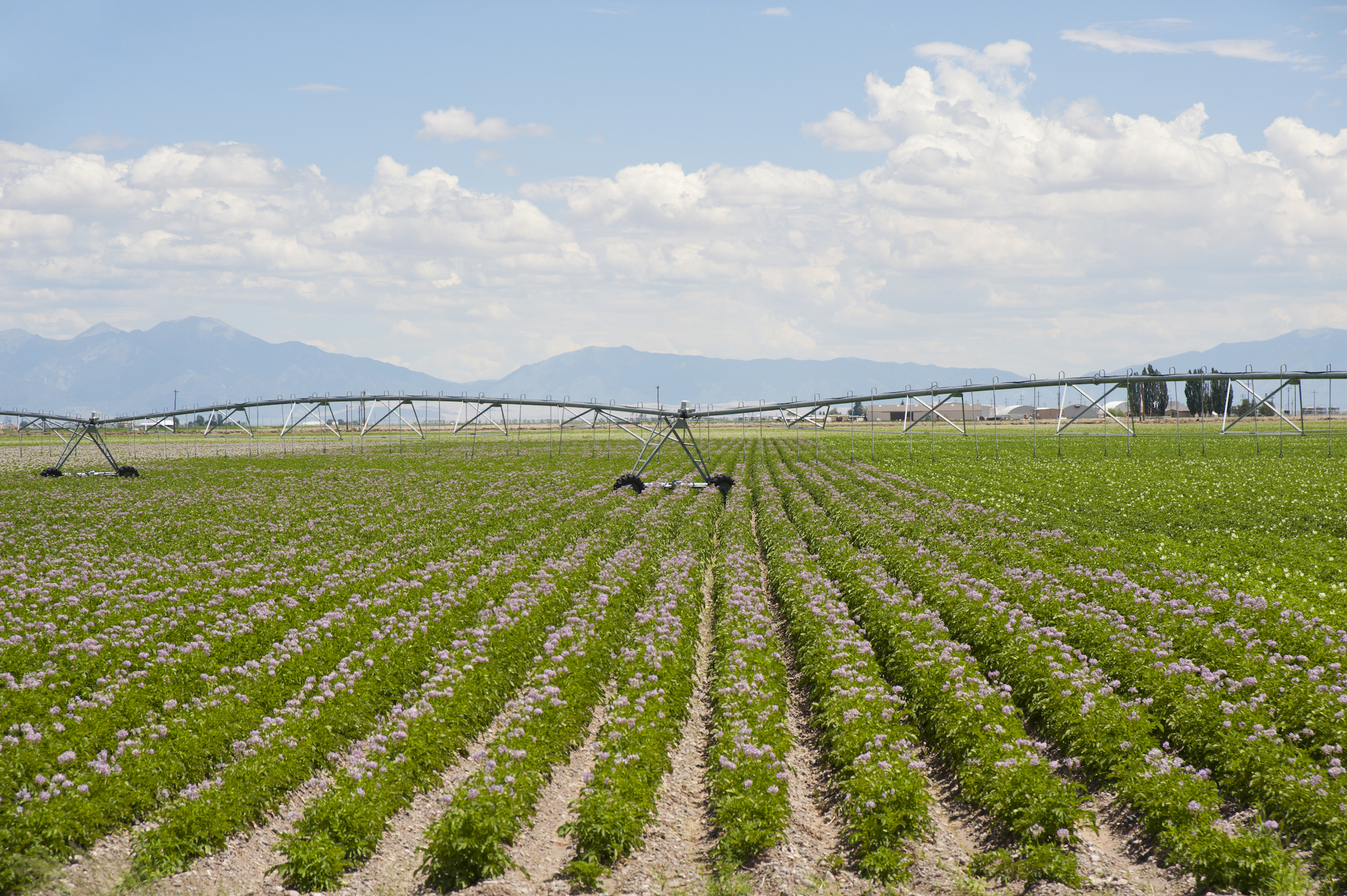 Irrigation equipment in field of potatoes