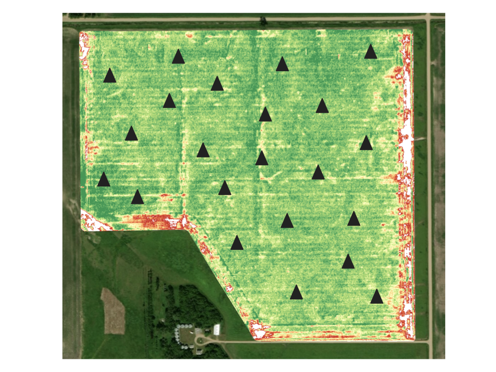 Sampling map for a cornfield